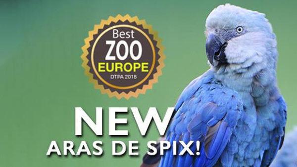 První evropská zoo veřejně vystavuje ary škraboškové a kobaltové. Uvidíte je v belgické Pairi Daiza