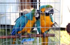 Přehled ptačích burz a výstav pro víkend 15. až 17. června 2018
