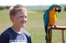 Volné létání papoušků pro veřejnost na letišti u Mělníka přilákalo na 150 zájemců