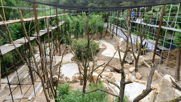 Zlínská zoo finišuje s rekonstrukcí průchozí voliéry pro ary hyacintové a další papoušky