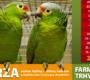 Ptačí burza ve slovenské Nitře posune začátek na 7:00 a zakáže prodej z přenosek
