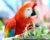 Odchovávali ary arakangy v zajetí už ve starověku? Rozbor DNA kostí ptáků z Mexika to potvrzuje