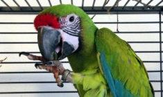 Pokud jde o ořechy, dokáží papoušci přijímat i složitá ekonomická rozhodnutí, zjistili vědci