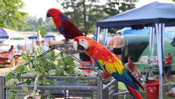Od pyrury po aru zelenokřídlého: na Krásném u Šumperka se i přes vedro sešlo 123 papoušků