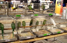 Přehled ptačích burz a výstav pro víkend 10. až 12. srpna 2018
