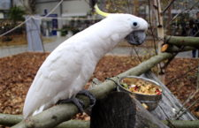 Přehled ptačích burz a výstav pro víkend 21. až 23. září 2018