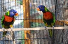 Přehled ptačích burz a výstav pro víkend 7. až 9. září 2018