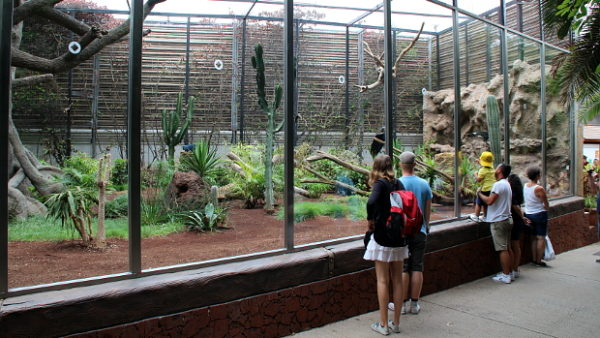 Videostřípky z Loro Parque: vzácní ararové, ara kobaltový, tricha orlí a kosatky