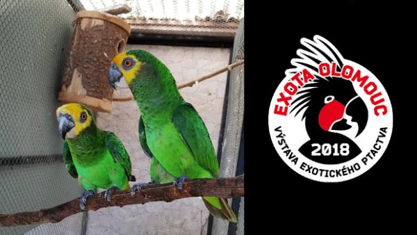 Světová premiéra na EXOTĚ Olomouc 2018: Poprvé vystaví papoušky žlutočelé