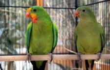 Přehled ptačích burz a výstav pro víkend 14. až 16. září 2018
