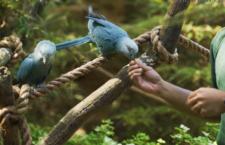 Singapurský Jurong Bird Park se mláďat arů škraboškových nedočká, má dvě samice