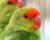 Přehled ptačích burz a výstav pro víkend 9. až 11. listopadu 2018