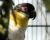 Přehled ptačích burz a výstav pro víkend 16. až 18. listopadu 2018
