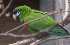 Papouščí zoo Bošovice letos navštívilo rekordních 30 tisíc lidí. Pořídila si ary amazonské a chystá dětskou zoo
