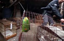 Pět let natvrdo za nelegální obchodování s papoušky. I za nabídky přes internet, navrhuje Brazílie