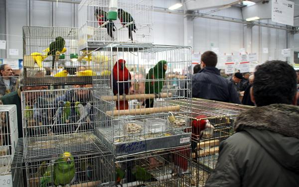 Italové s velkými ptáky