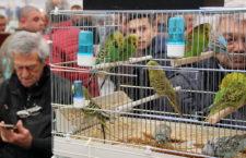 Přehled ptačích burz a výstav pro víkend 30. listopadu až 2. prosince 2018