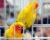 Přehled ptačích burz a výstav pro víkend 7. až 9. prosince 2018