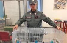 Odvrácená strana burzy v Reggio Emilia: 70 zabavených ptáků, krádeže za 20 tisíc eur, jeden odsouzený