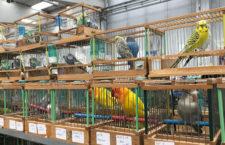 Přehled ptačích burz a výstav pro víkend 14. až 16. prosince 2018