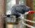 Přehled ptačích burz a výstav pro víkend 11. až 13. ledna 2019