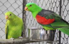 Přehled ptačích burz a výstav pro víkend 25. až 27. ledna 2019