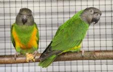 Přehled ptačích burz a výstav pro víkend 4. až 6. ledna 2019