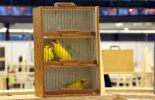 Přehled ptačích burz a výstav pro víkend 18. až 20. ledna 2019