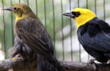 Přehled ptačích burz a výstav pro víkend 1. až 3. února 2019