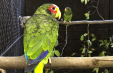 Přehled ptačích burz a výstav pro víkend 15. až 17. února 2019
