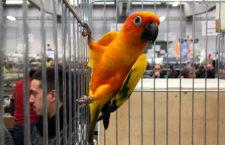 Přehled ptačích burz a výstav pro víkend 1. až 3. března 2019