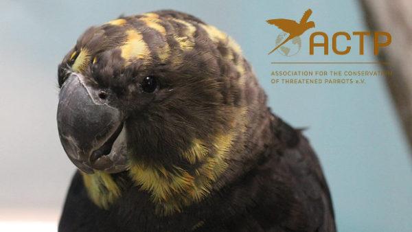 Německá prokuratura odmítla obvinění deníku Guardian, že ACTP nelegálně prodává papoušky