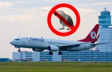 Turecké aerolinie zpytují svědomí: celosvětově zakázaly přepravu papoušků žako