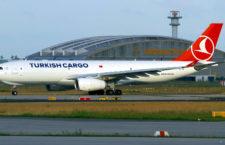 Turkish Airlines čelí obvinění, že ve svém cargu pašovaly papoušky žako z Konga, Nigérie a Mali
