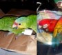 Spor Guatemaly a Belize o území nahrává pašerákům papoušků. Není jasné, kudy vede hranice