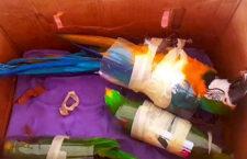 Kolumbijská policie zabavila nelegální zásilku papoušků určenou pro Španělsko a Nizozemsko