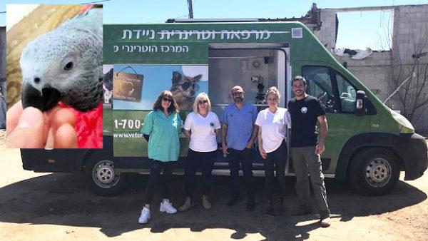 Izraelská neziskovka zachránila palestinského papouška žako z pásma Gazy