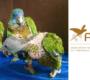 Další amazoňané mnohobarví dorazili ze Svaté Lucie do německého ACTP