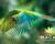 Velké sčítání arů zelených ve Střední Americe: bude jich více než 1 500?
