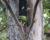 Tragický požár na ostrově Ometepe v Nikaragui zničil unikátní hnízdiště amazoňanů žlutokrkých