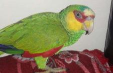 """Prodejci papoušků v Mexiku """"vyrábí"""" nové druhy pomocí bělidla. Často je nenapravitelně poškodí"""