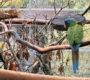 Pomozte nalézt ulétlého aru horského z Pardubicka! Někdo ho záměrně vypustil z voliéry