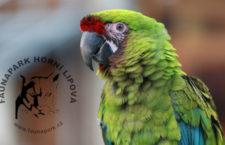 Faunapark v Lipové-lázních získal statut zoologické zahrady. Teprve druhé v Olomouckém kraji
