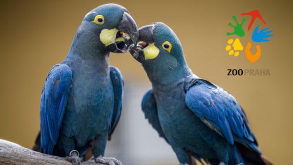 Rákosův pavilon v pražské zoo se otevře 28. září. Nabídne ary kobaltové, trichy orlí či kakaduy palmové