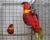 Přehled ptačích burz a výstav pro víkend 23. až 25. srpna 2019
