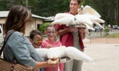 Zákaz krmení kakaduů! Městečka poblíž Melbourne budou účtovat pokuty až 25 tisíc korun