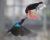 Strdimilové a kakadu havraní: největší taháky letošní výstavy exotů v Botanické zahradě na pražském Albertově