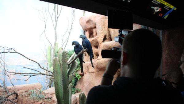 Na návštěvě Rákosova pavilonu, nové expozice vzácných papoušků pražské zoo