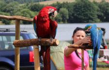 Na Chomutovsku proběhne 14. září sraz vyznavačů volného letu papoušků. Přijít může i veřejnost