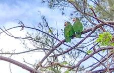 Necelý měsíc po řádění hurikánu Dorian na Bahamách se objevují první amazoňané kubánští